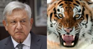 AMLO amenazado tigre