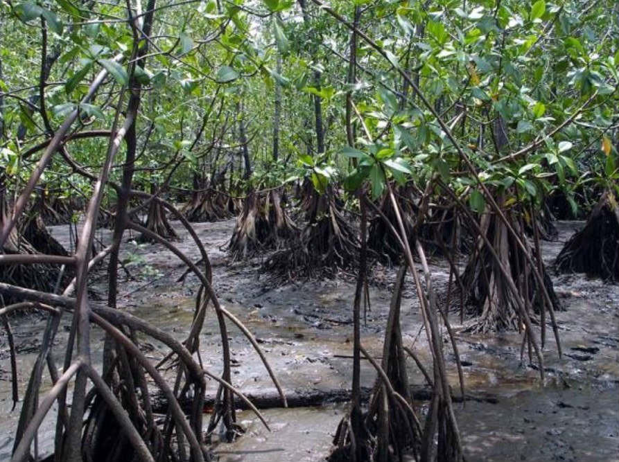 Contaminación de manglares.
