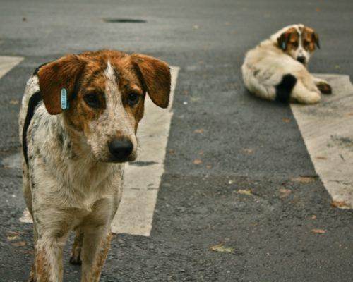 Perros callejeros.