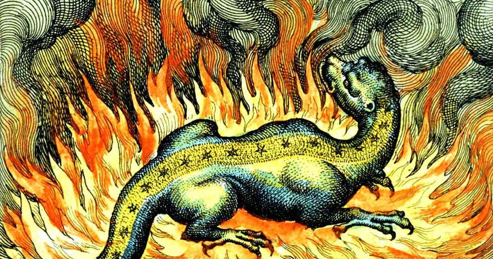 Salamandra de fuego.