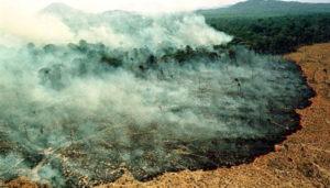 deforestación/_Amazonia