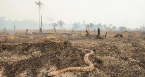 incendio_Amazonia