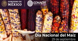 Conacyt_maíz_transgénicos