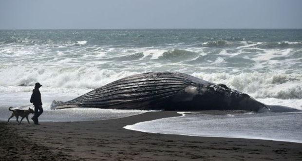 blob_océano_Pacífico