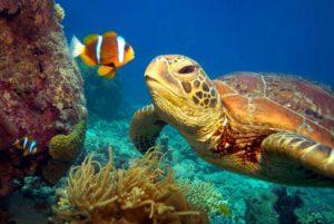 Pelicula de tortugas