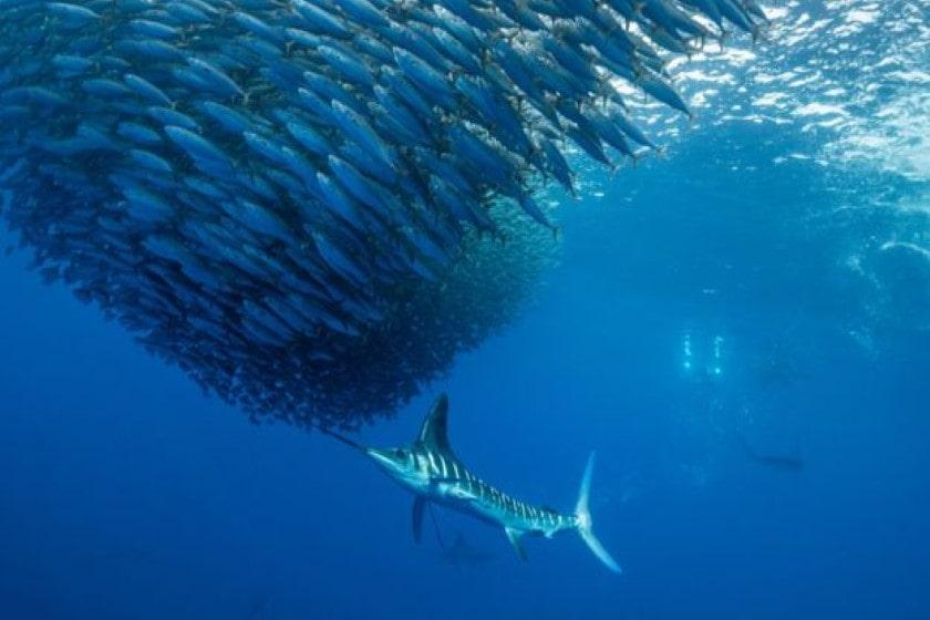 """Resultado de imagen de Océanos pierden grandes cantidades de oxígeno por el cambio climático"""""""