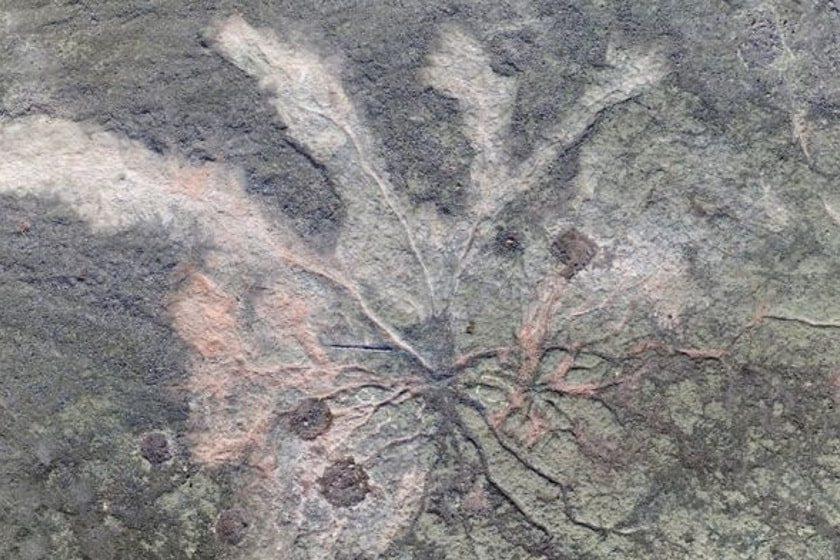 Bosque fosilizado más antiguo del mundo