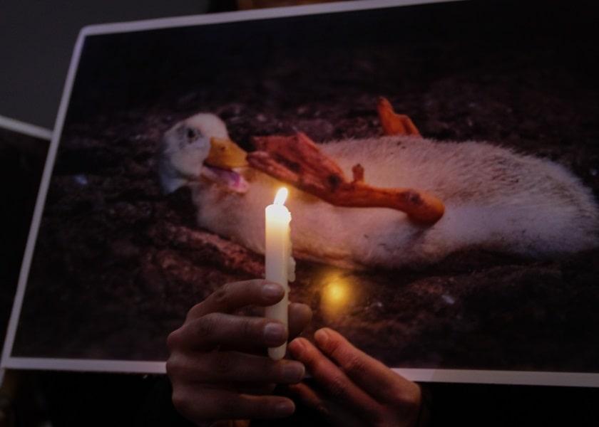 Una activista prende una vela a una foto de un ganso en medio de protestas en México.