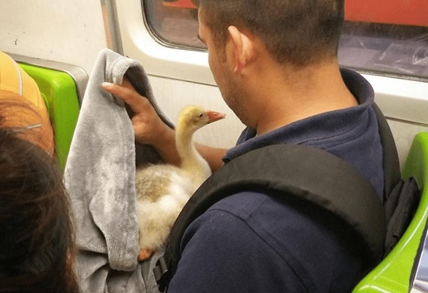Ganso viaja en metro de la CDMX
