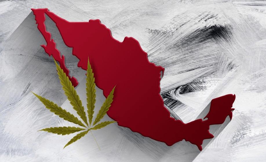 Legalización de la marihuana en México avanza en el Senado