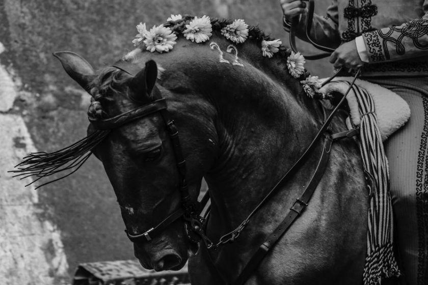 toreo a caballo