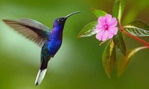 Jardines de colibríes en la Ciudad de México