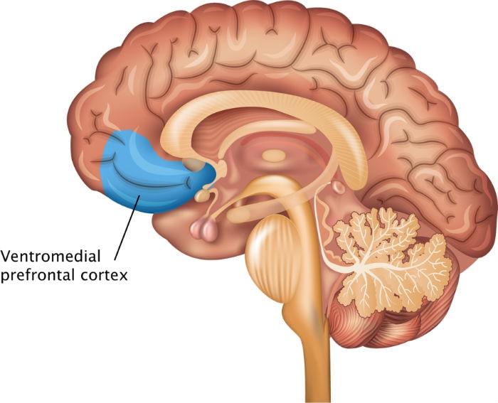 Ubicacion de la corteza prefrontal
