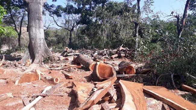 destruccion naturaleza