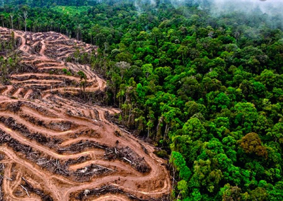 medio ambiente en peligro