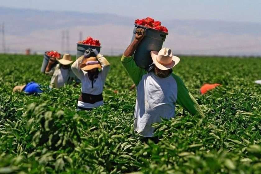 trabajadores mexicanos a Canadá