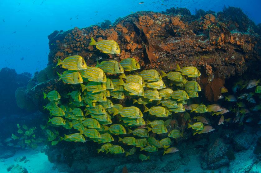 Cabo Pulmo, reserva ecologica