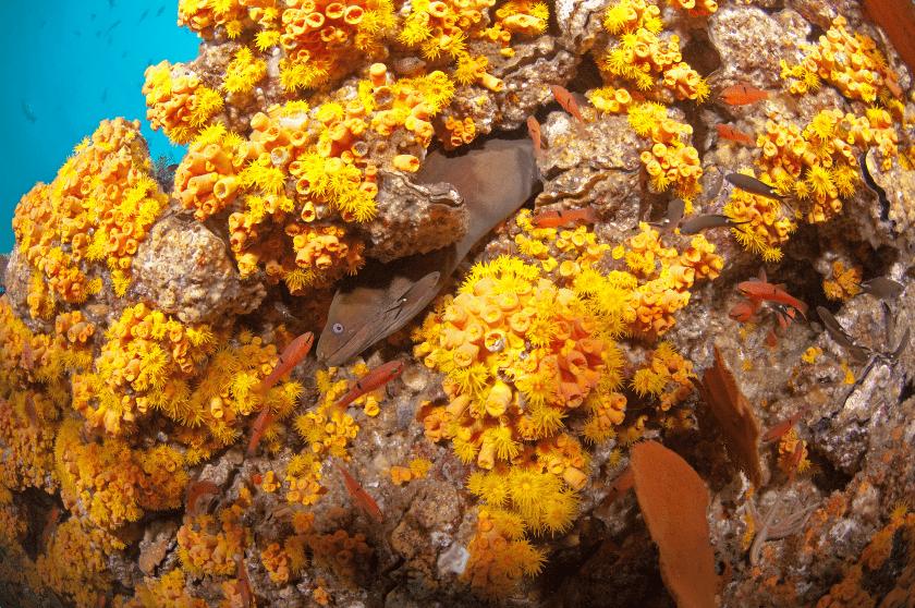 Cabo Pulmo, arrecifes de coral