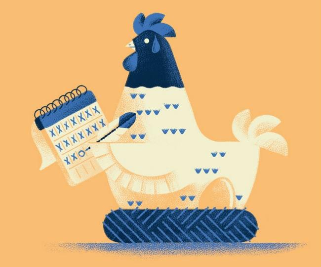 gallina incubando