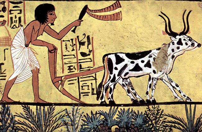 arado egipto