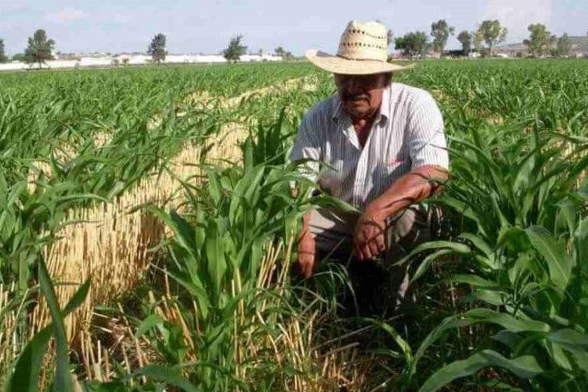 producción de alimentos en México