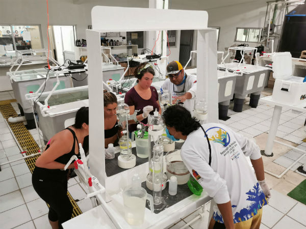 laboratorio de coral