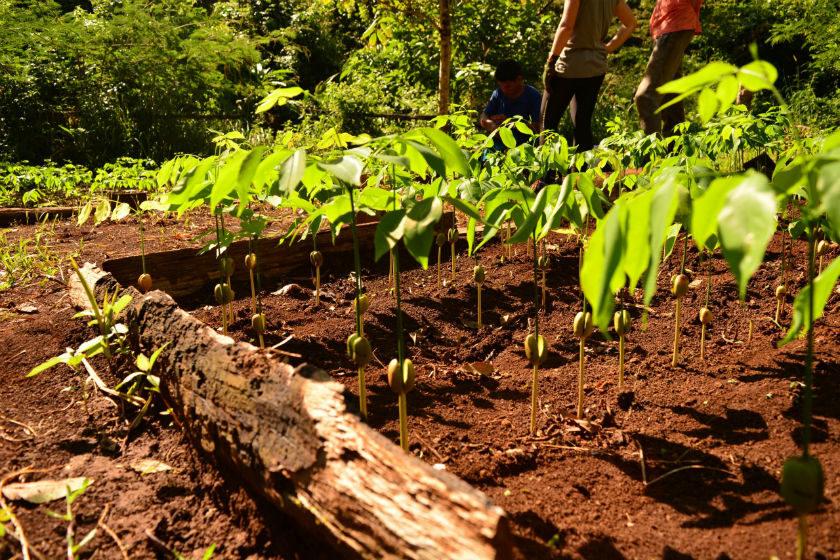 reforestacion virtual ectagono