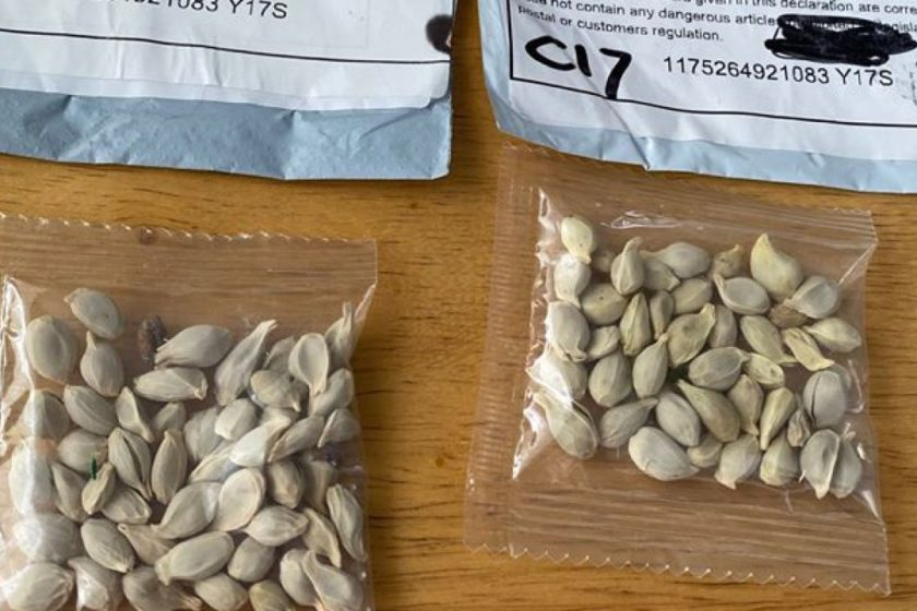semillas enviadas de China a Estados Unidos