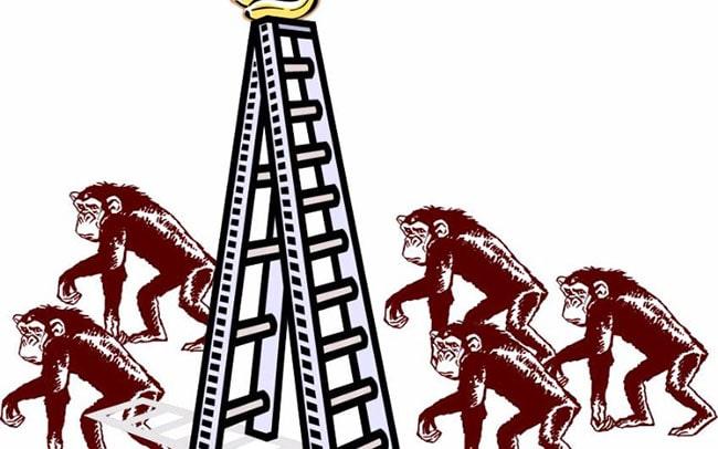 experimento de monos