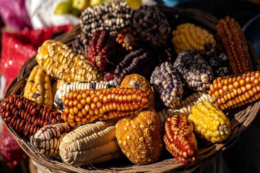 dia del maiz