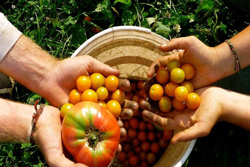 alimentos agricolas