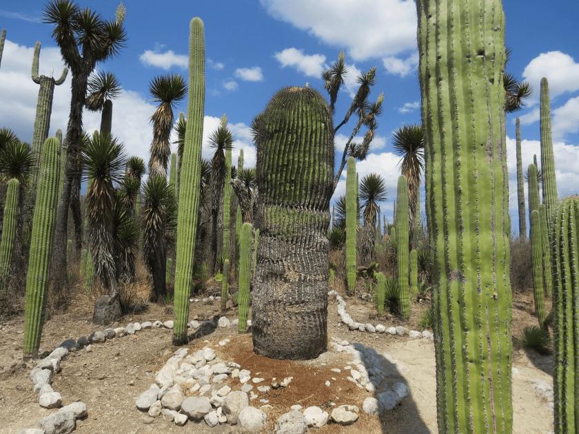 Reserva de Tehuacán-Cuicatlán