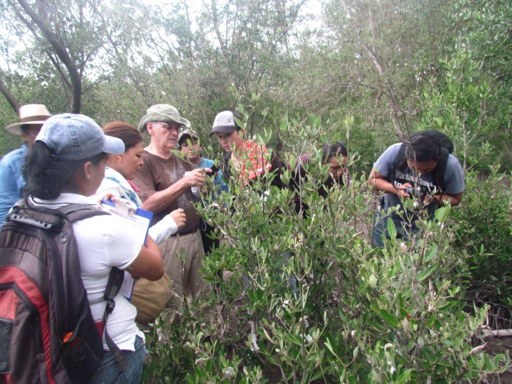manglares en mexico