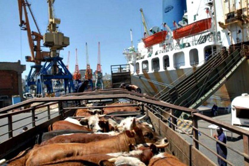 exportaciones de ganado bovino