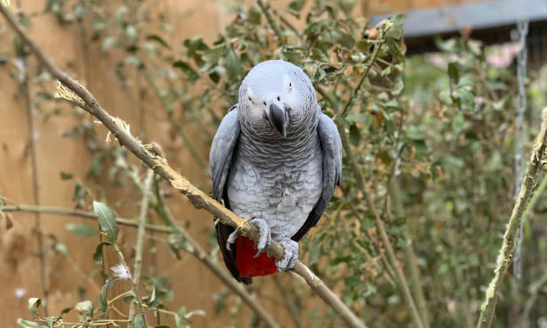 Loros malhablados son expulsados de zoológico de Londres