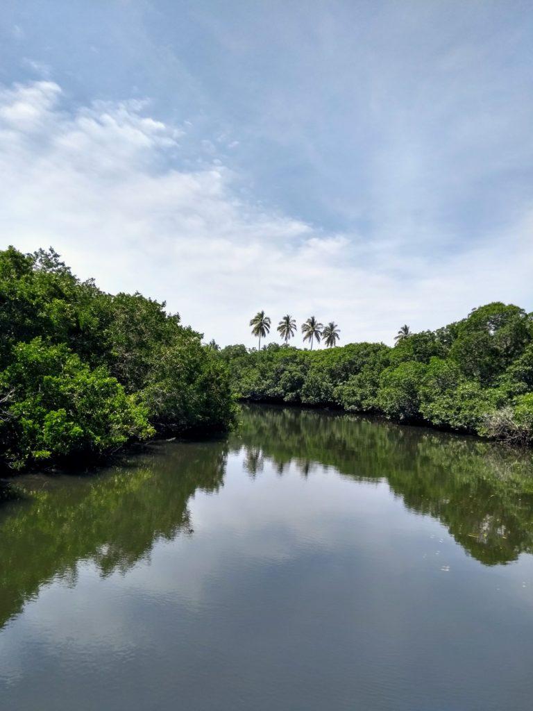manglares Estero de Urias, Mazatlan