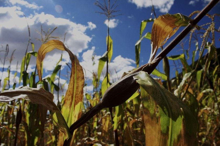 Producción de granos básicos en México