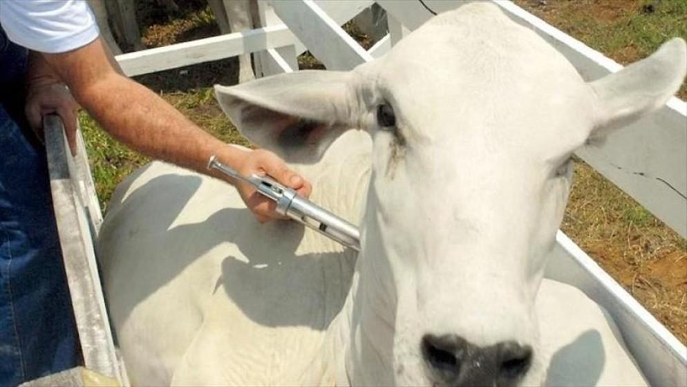 combate a la rabia en especies ganaderas
