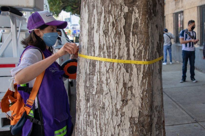 La UNAM y la Alcaldía Cuauhtémoc censaron el arbolado de la demarcación.