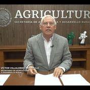 El titular de la Sader, Víctor Villalobos, garantiza el abasto de alimentos durante la pandemia.