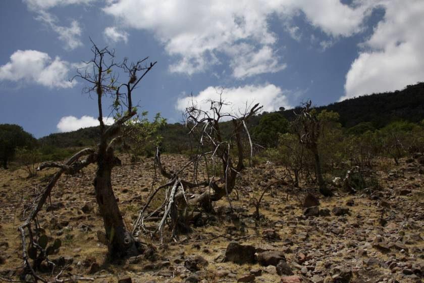 Cambio climático y campo