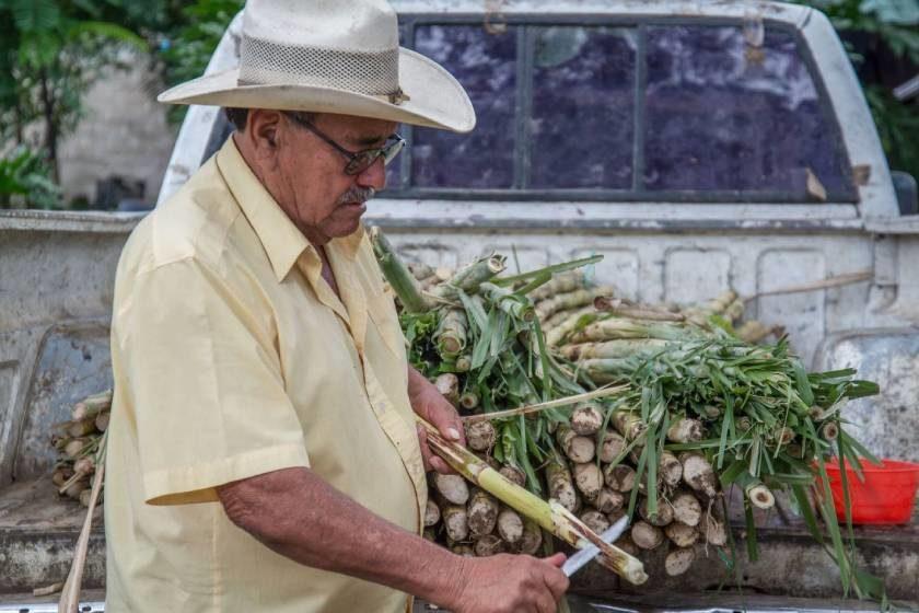 Agricultura_apoyos_Tabasco
