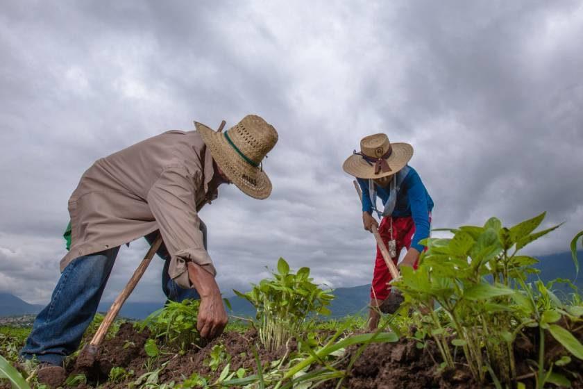 fertilizantes_Puebla_Morelos_Tlaxcala