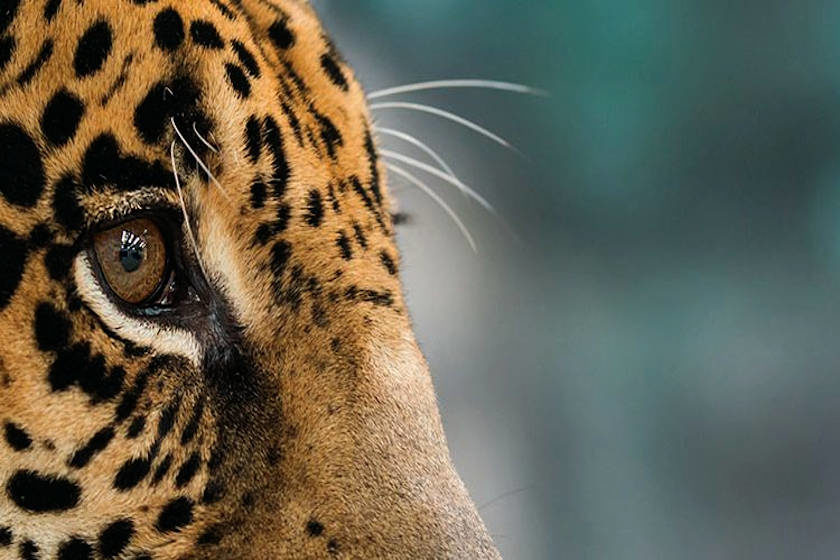 riesgos jaguar