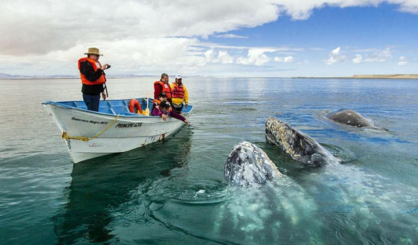 Laguna Ojo de Liebre, Baja California Sur