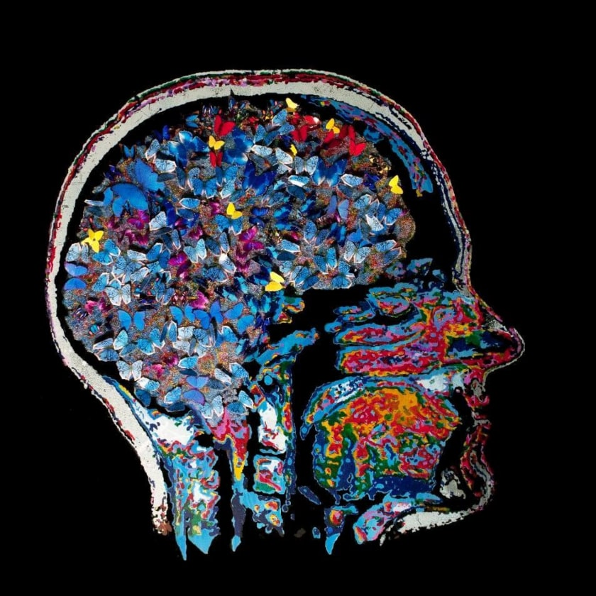 neuroestetica bases cerebrales