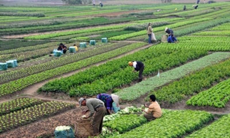 SADER lanza convocatoria para el desarrollo de la agricultura