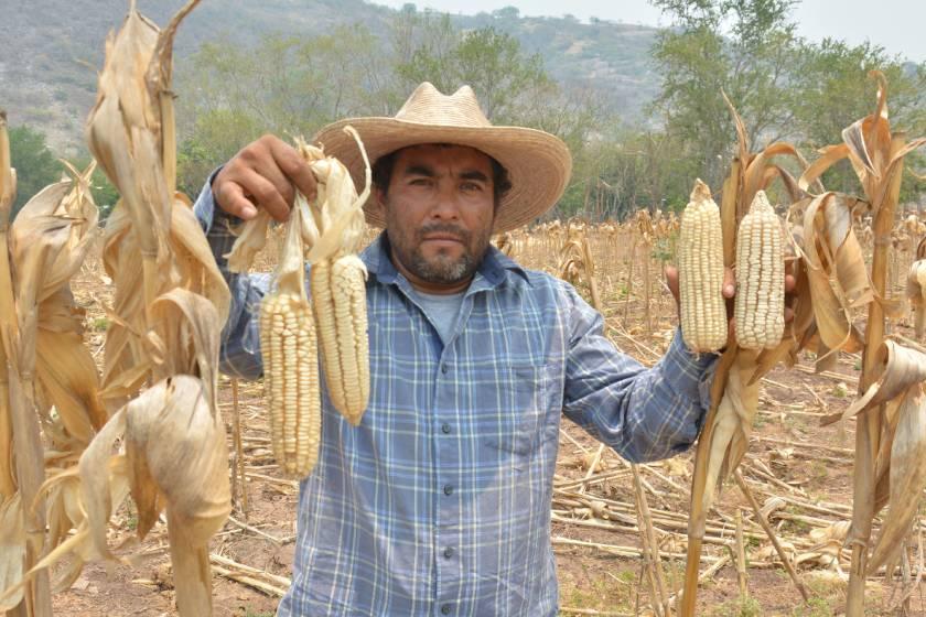 Agricultura_fertilizantes_Tlaxcala