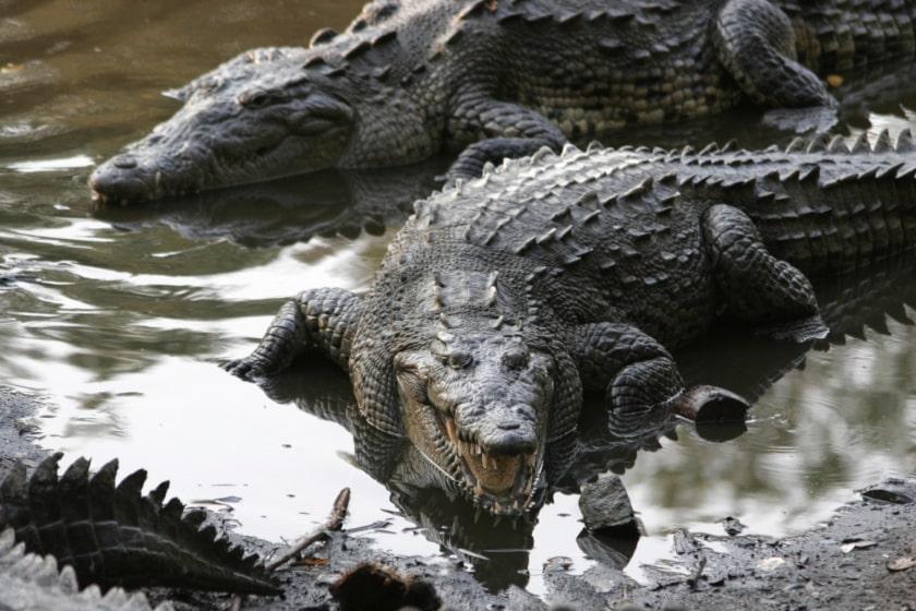 cocodrilos en Jalisco