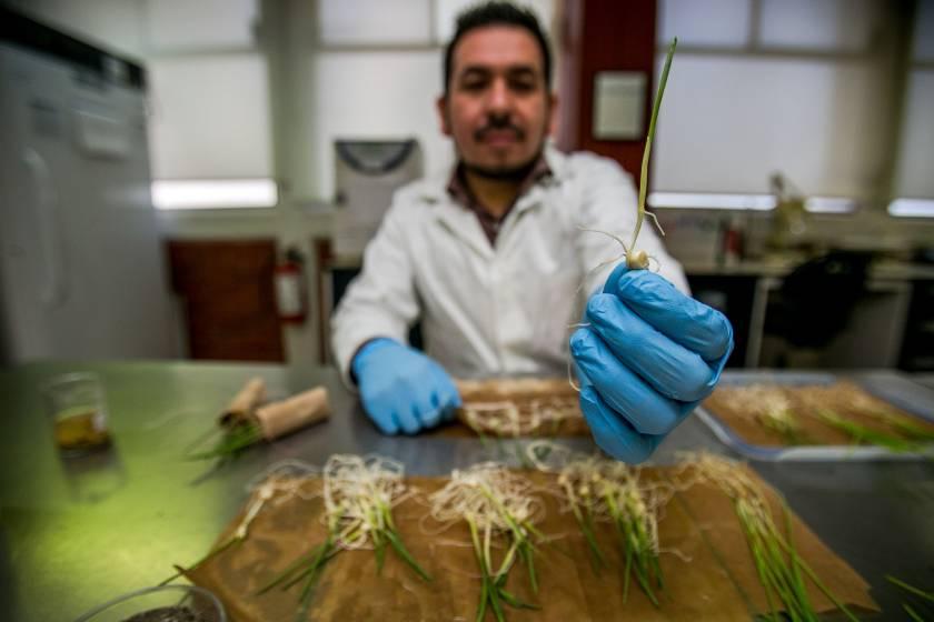 INIFAP_Agricultura_semillas